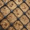 Germinação de sementes selecionadas