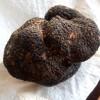 Trufa Negra (Tuber melanosporum)